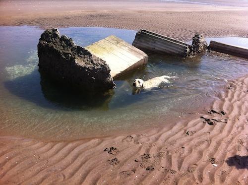 Dog in Rock Pool